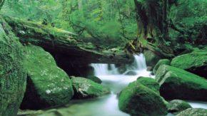 白谷雲水峡(鹿児島)
