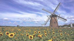 Sun Flower Windmill
