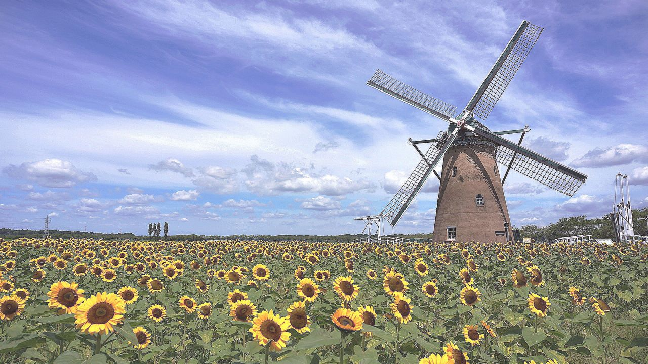 Sun Flower Windmill