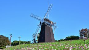 Cosmos Windmill